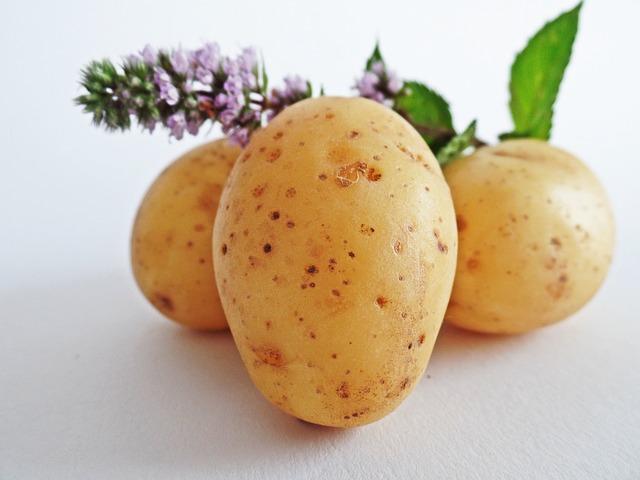 De geschiedenis van de aardappel