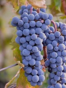 druiven als natuurlijk suikerproduct